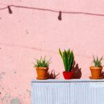 Tropische planten voor ons klimaat